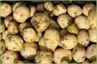 Stickstoff im Kartoffelanbau