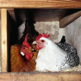 solte legemehl an hühner gefüttert werden